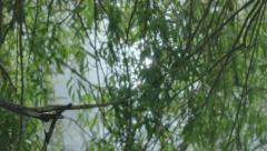 Sun Reflection in Pond through Weeping Willow Tree Lense Flare - 25FPS PAL Stock Footage