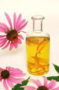 Coneflower essential  oil in bottle - stillife Stock Photos