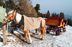 Horse Sledge in Dolomiti, Italy Stock Photos