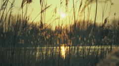 Warm Sunset Pond With Plume Reeds - 25FPS PAL Stock Footage