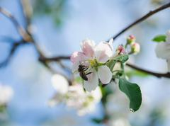 one small bee pollination flower on tree - stock photo