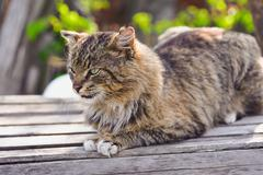 Unruffled cat sitting and stern looking Stock Photos