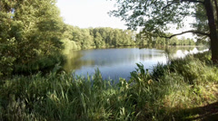 4k 360° rotation in nature reserve with ponds Stock Footage