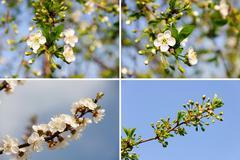 Many white spring flower. nature backgrounds Kuvituskuvat