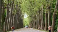 Tree lined path - Parc de Chenonceau - France Stock Footage