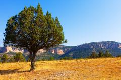 Stock Photo of Single tree at mountainous terrain