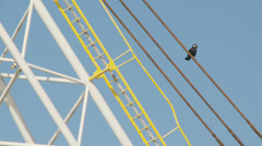 Crow on Spinnaker tower (cu) Stock Footage