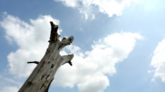 Time lapse of clouds rolling past a dead tree in sunlight Stock Footage