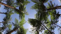 Tropical tree nursery Stock Footage
