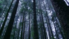 Coastal Trees in the Fog Stock Footage
