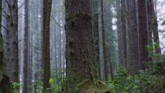 Dark Forest Stock Footage