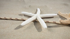 Starfishes, seashell and rope on the beach. HD with motorized slider. 1080p. Stock Footage