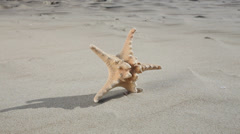 Starfish seastar star on the beach. Full HD with motorized slider. 1080p. Stock Footage