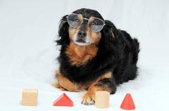 Dog iq test Stock Photos