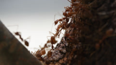 Ant crawling on wood Stock Footage