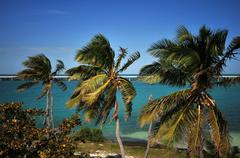 Palm trees - florida keys, usa. bahia honda park. Stock Photos