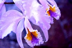 Blossom orchid closeup. tropical forest flowers Stock Photos