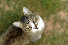 Nice cat on grass. animals photo collection. Stock Photos