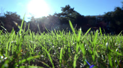 Green grass in artistic composition Stock Footage