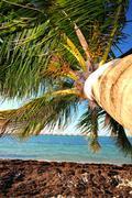 palm tree - bahia honda state park - stock photo