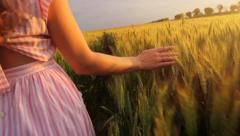 Elegant Young Female Hand Caressing Wheat Field Slow Motion Stock Footage