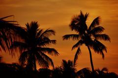 Florida keys. palm trees in sunset florida, usa Kuvituskuvat