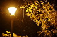 Stock Photo of fall night in park. dark fall in the city park