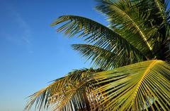 palm leafs on the clear blue sky. tropical place - stock photo