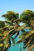 Tropical place. palm trees. Stock Photos