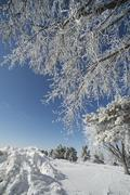 Winter time in usa midwest. trees covered by snow Stock Photos