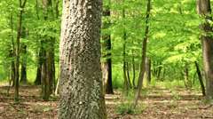 Green forest with oak trees Stock Footage