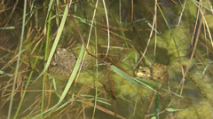 Beautiful green fog looking sitting lake pond water mash animal wild weed crow  Stock Footage