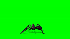 Spider walks - green screen - stock footage