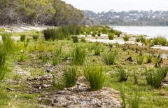 coila lakeside. bingie (near morua). nsw. australia - stock photo