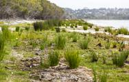 Stock Photo of coila lakeside. bingie (near morua). nsw. australia