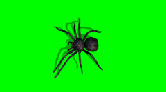 Spider walks - green screen Stock Footage