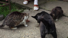 Cats and dog eating together, sharing food, friendly pets, hungry animals - stock footage