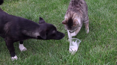 Funny pets eating, cat and dog sharing food, friends, cute pets, garden Stock Footage