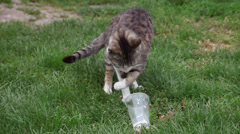 Elegant cat eating, from a plastic cup, smart, beautiful, funny pet Stock Footage