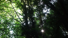 Nature Forest. Camera Slider Stock Footage