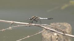 Detail macro closeup beautiful dragon fly natural nature bug water lake pond day Stock Footage