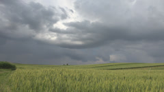 Pan right panorama cultivated field wheat plain fresh cloudy stormy sky nature  Stock Footage