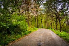 spring color along a road through a forest in lancaster county central park,  - stock photo