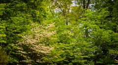 Stock Photo of spring color at centennial park, columbia, maryland.