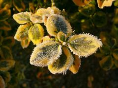 Frozen plants detail yellow and green leaves Stock Photos