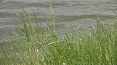 Beautiful riverside river lake pond green grass ripple water peaceful place day Stock Footage