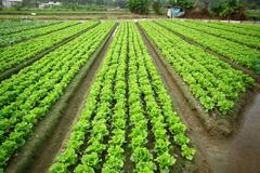 Cultivated land Stock Photos