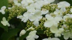 Flowers in the garden - stock footage