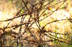 Barbed wires on apocalyptic background Stock Photos