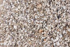array of seashells on the beach - stock photo